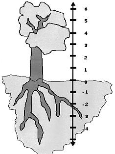 negative number tree