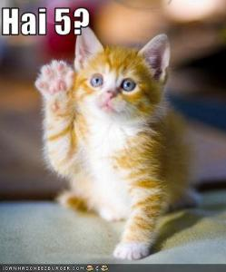 funny-pictures-kitten-asks-for-a-high-five1